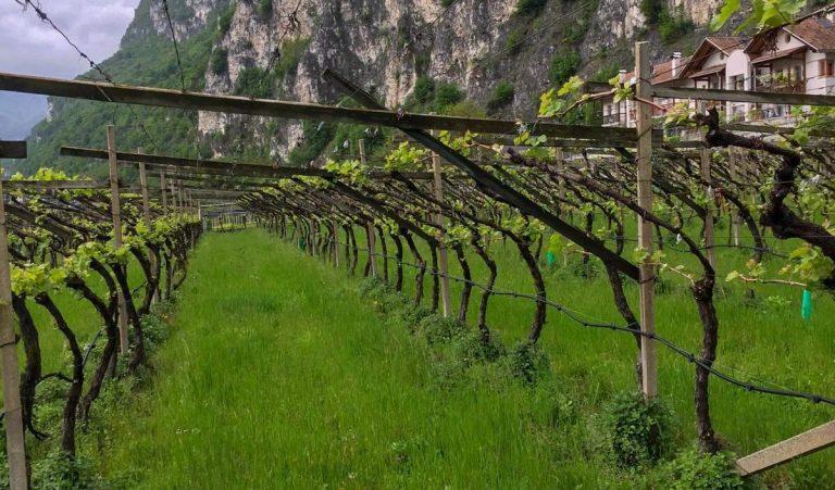 La teoria del doppio nel vino