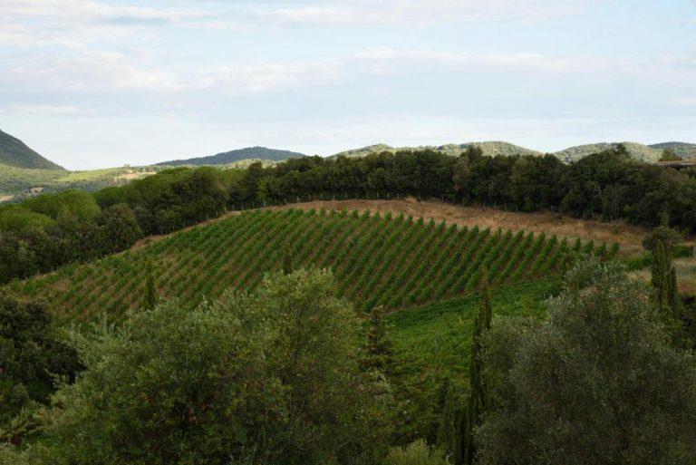 Il viaggio di Lia a Suvereto  per raccontarci la bella storia dell'Azienda Agricola I Mandorli